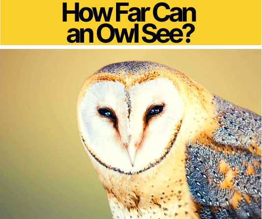 How Far Can an Owl See - During Day or Night