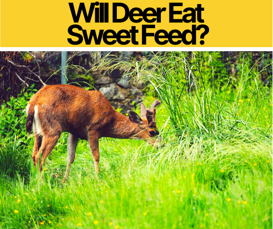 Will Deer Eat Sweet Feed - What About Horse & Cattle Feed?