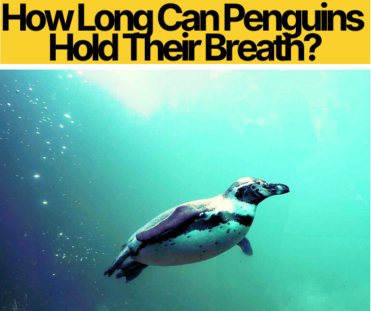 How Long Can Penguins Hold Their Breath & Stay Underwater