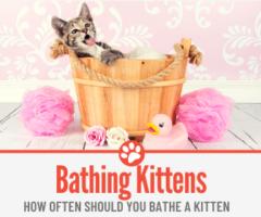 How Often Should you Bathe A Kitten - How to Bathe Kitten!