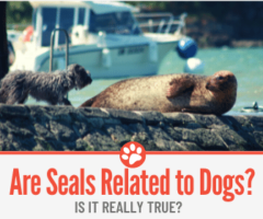 Are Seals Related To dogs & What about Sea Lions?