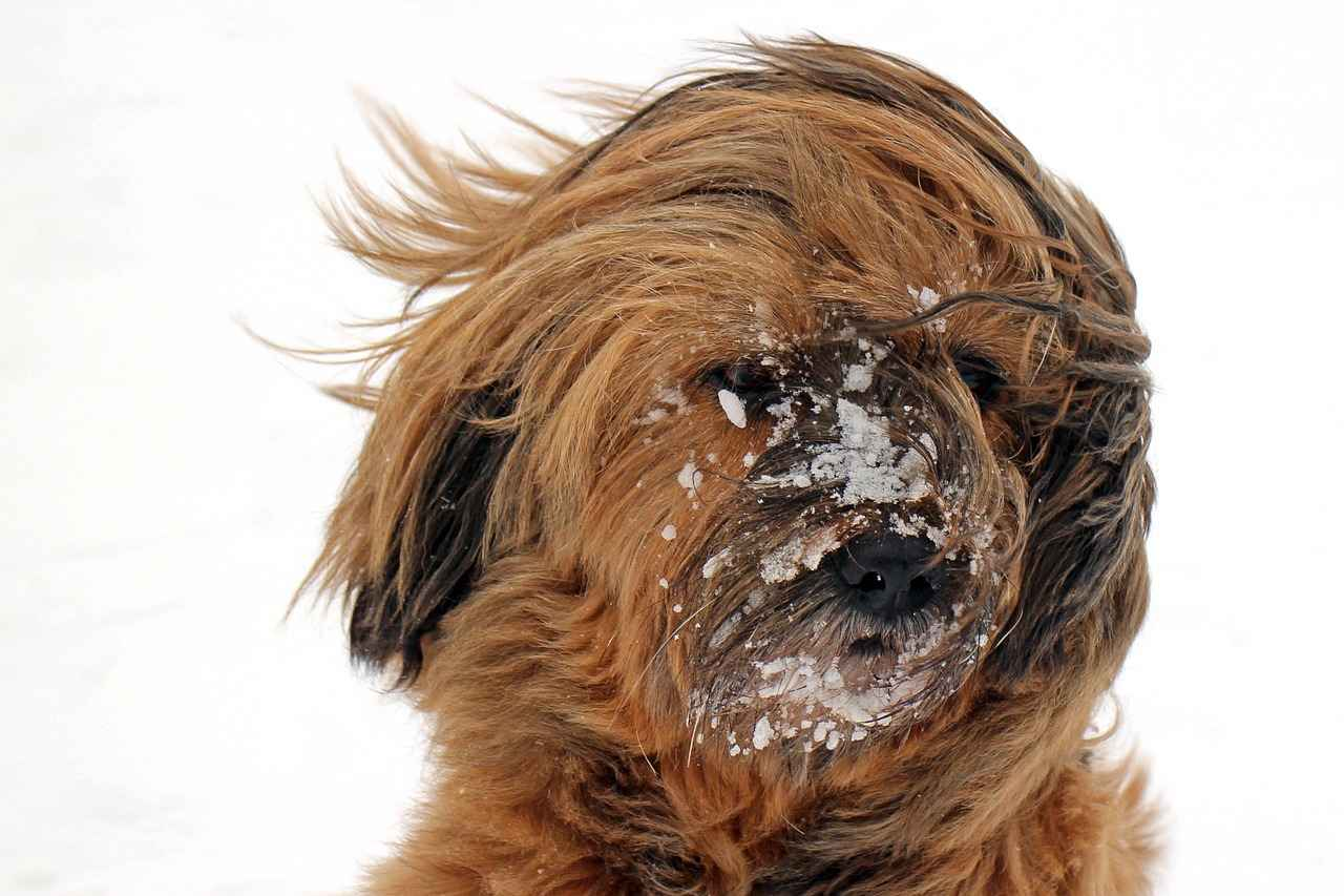 Dog Ear Hematoma Popped - Diagnose & Treat it