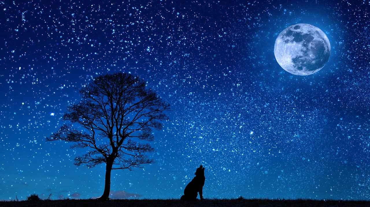 Are Dogs Nocturnal? Which Breeds are Nocturnal?