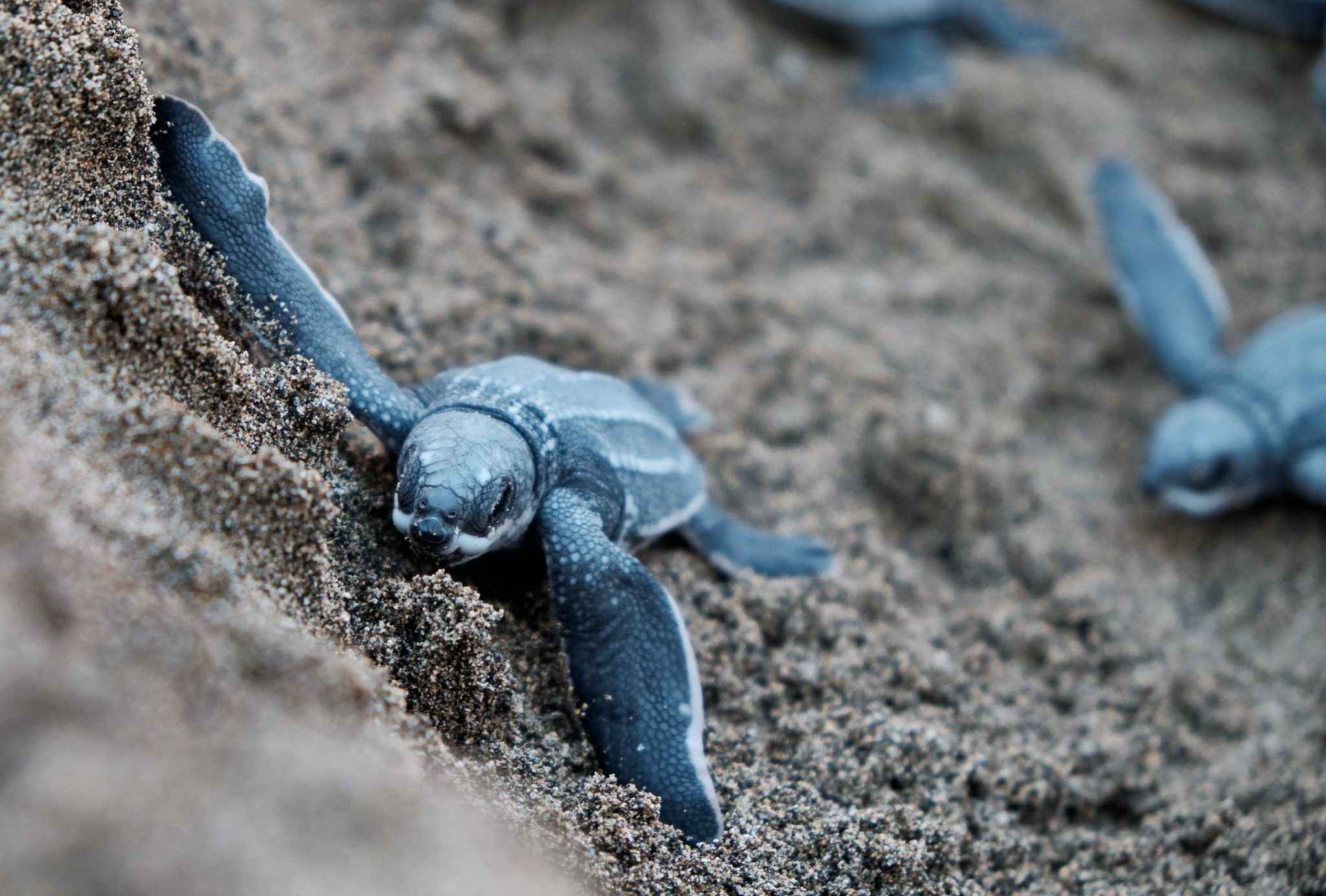 How Many Babies Do Turtles Have - How Often & How Many?