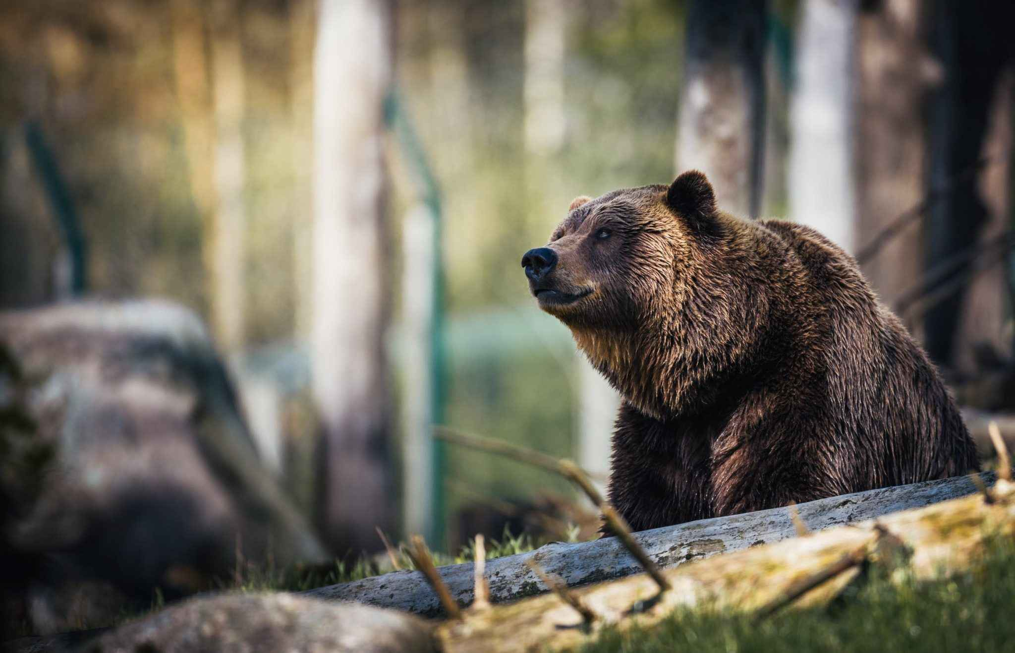 How strong is a black bear - Who Can Beat a Black Bear?
