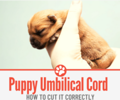 How to Cut Puppy Umbilical Cord & Stop it From Bleeding.
