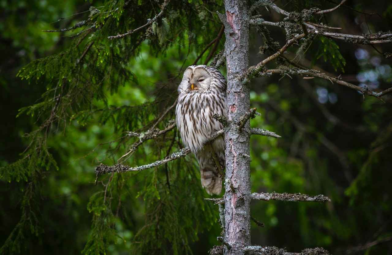 Can Owls See during the Day – Or are they Blind in Day?