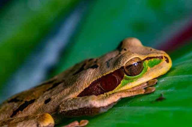 What Eats Frogs? Top Frog Predators!