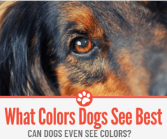 What Colors Do Dogs See BEST? Can Dogs See Colors?