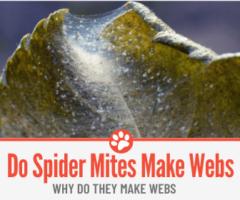 Do Spider Mites Make Webs – Why Do They Make Webs?