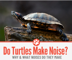 Do Turtles Make Noise? Why?