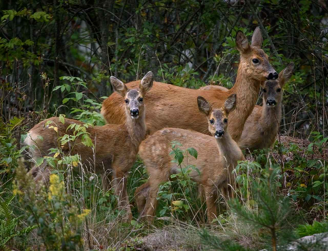 Is Deer Meat ( Venison ) Good for Dogs & Can They Eat it?