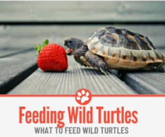 What to Feed Wild Turtles – The Ultimate Wild Turtle Guide