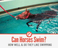 Can Horses Swim? How Well & Do They Like Swimming?