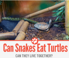 Do Snakes Eat Turtles – Can They Live Together?