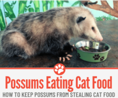 Do Possums Eat Cat Food &How to keep Them away from Cat Food