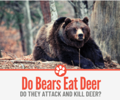 Do Bears Eat Deer? Will They Attack and Kill Deer?