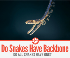 Does a Snake Have a Backbone &Do All Snakes have one?