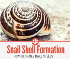 How Do Snails Make Shells - How are They Formed