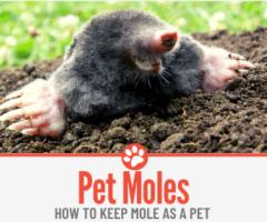 How to Keep A Pet Mole -GUIDE