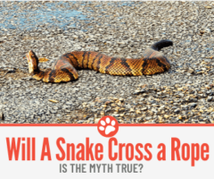 Will a Snake Cross a Rope?  Is the Myth true?