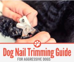 Aggressive Dog Nail Trimming Guide