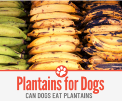 Can Dogs Eat Plantains? Are They Safe?