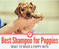 What To Wash A Puppy With – Best Shampoo for your Puppy?